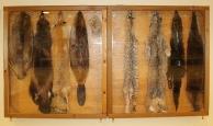 Fur Chamber
