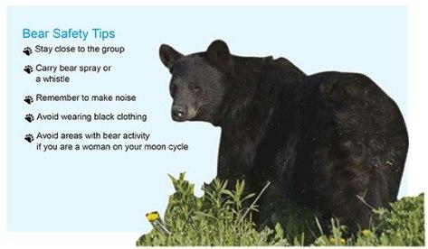bear_tips